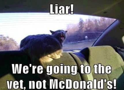 Liar! We're going to the vet, not McDonald's! Angry Cat meme