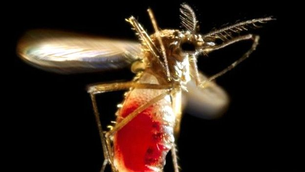 ginebra-virus-zika