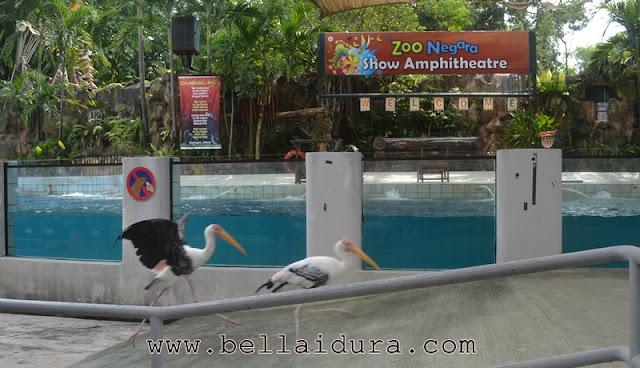 haiwan zoo negara