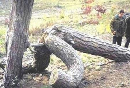 Sacanagens da natureza  - Imagens hilárias