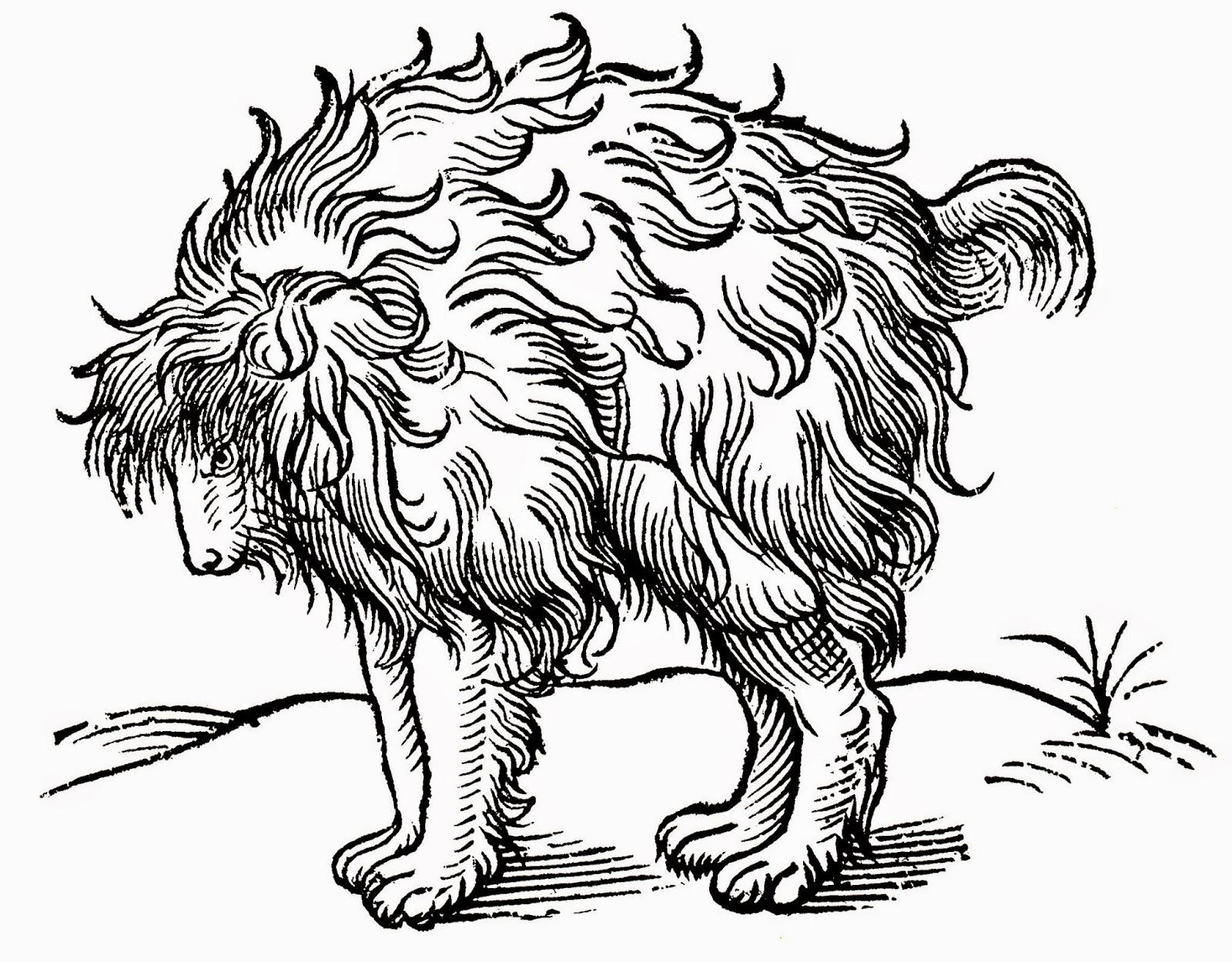 olaus magnus 1658
