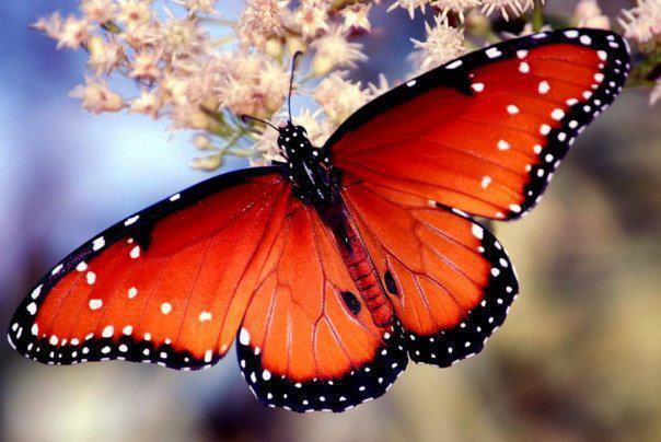 poder-palabra-mariposa