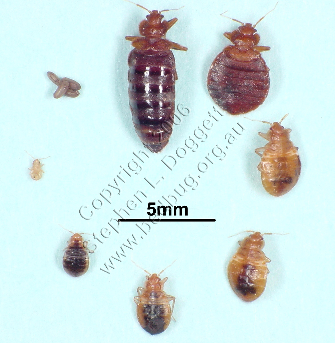 Nerd Kills Bed Bugs: Scan Phase