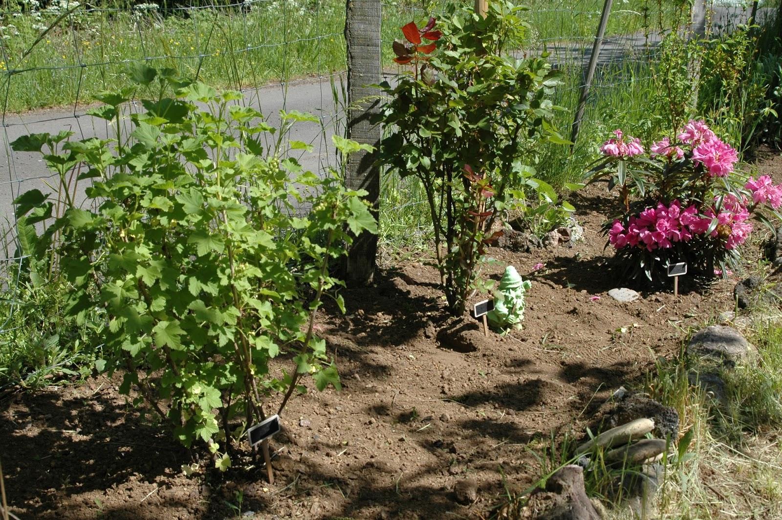 Ces doux moments le printemps au jardin on plante avec for Plante au jardin