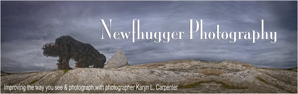 Newfhugger Photo