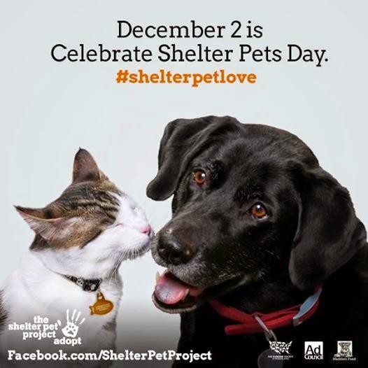 December 2, 2014 Shelter Pets Day