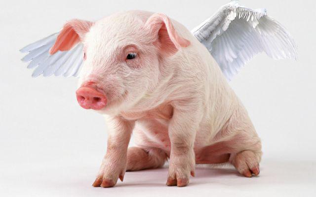 Digital Media 1 @ NJCU: Pig with wings