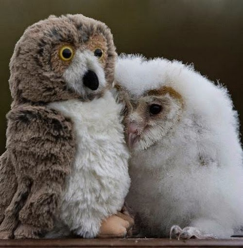 adorable animals with toy versions-3