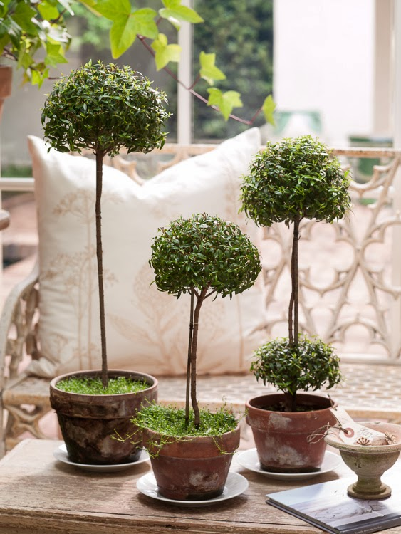 Tone on tone my myrtle topiaries in southern living for Garden topiary trees