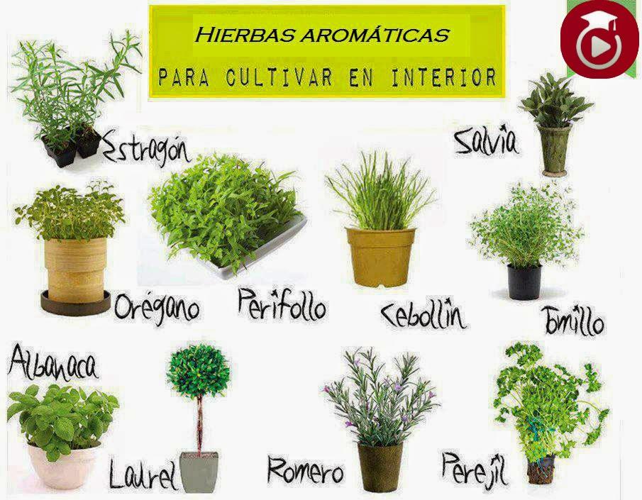 Tipos de plantas y cactus - Plantas de interior tipos ...