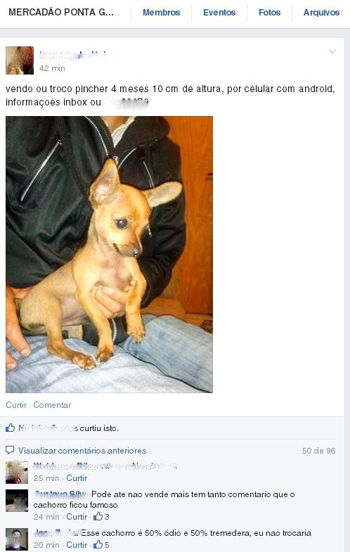 Troque um celular por um cachorro no Mercadão Ponta Grossa