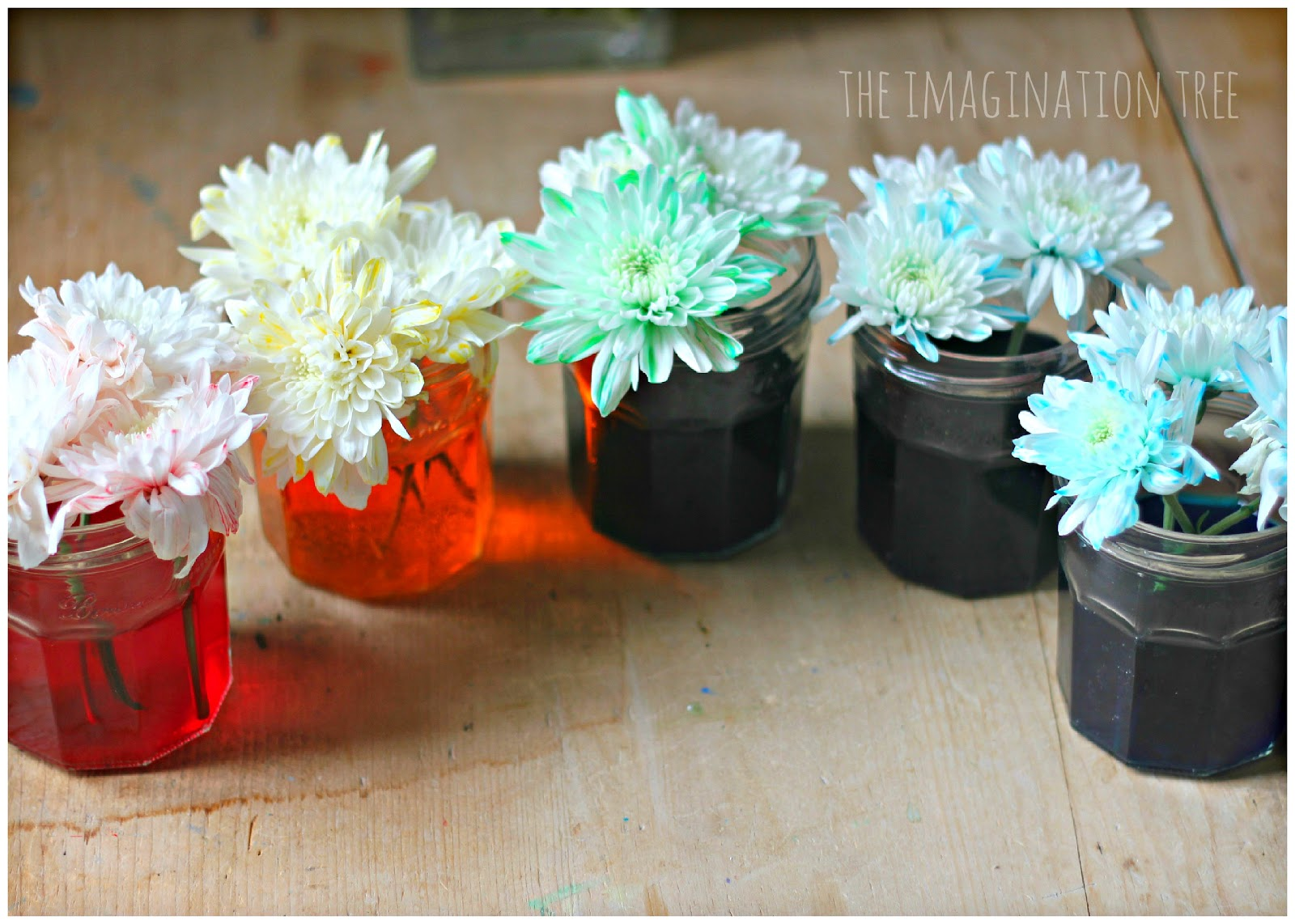 Dyed flowers science experiment the imagination tree what they are learning while they play science knowledge and understanding of the world performing a simple science experiment making predictions and reviewsmspy