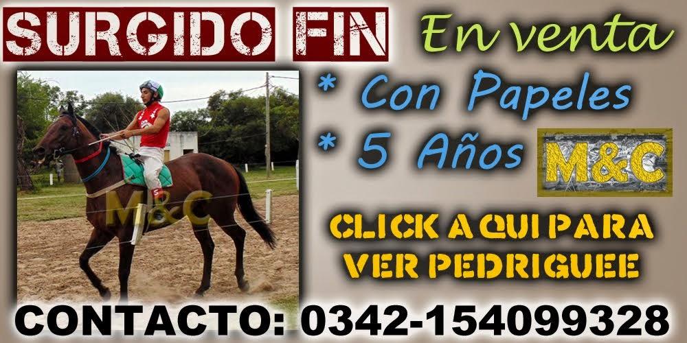 SURGIDO FIN - 01-03-15