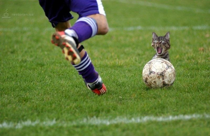 футбол словения статистика