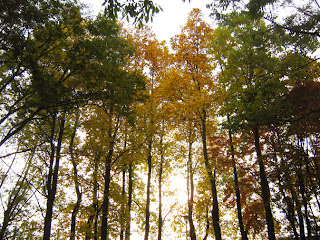 紅葉の林立