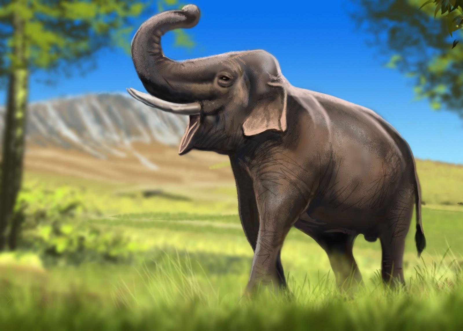 Zoo Park Run Your Own Animal Sanctuary The Indian Elephant