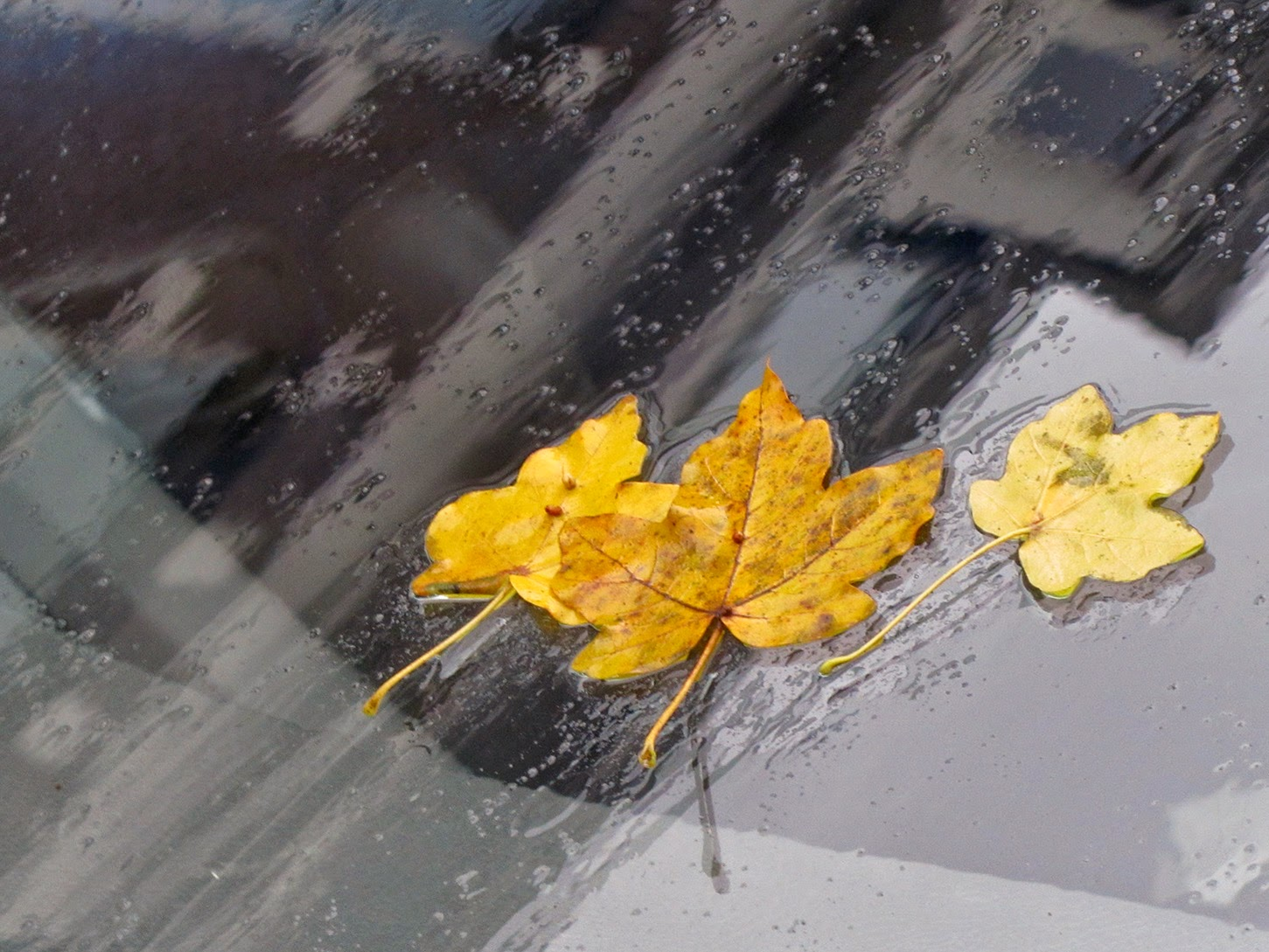 three leaves on front window of a car