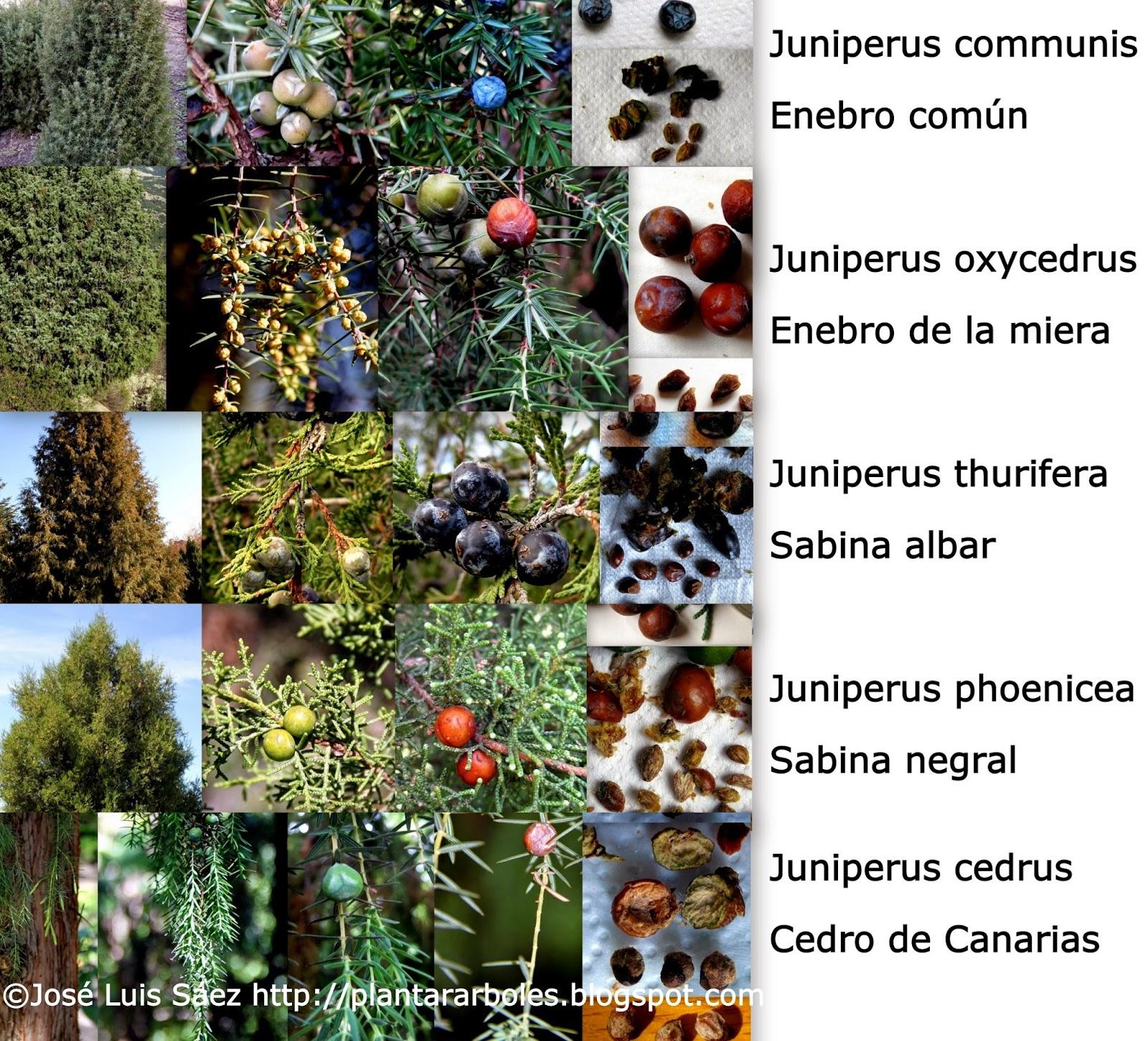 PLANTAR ÁRBOLES y arbustos Tipos de frutos y semillas AUTÓCTONOS