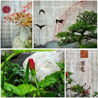 museo de bonsáis en Gueñes