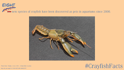 Crayfish research paper