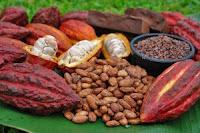 cacao dieta dimagrante