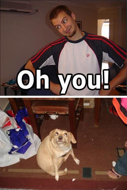 Oh You My dog