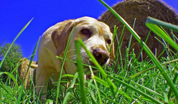 Hasil gambar untuk dog vomit ill