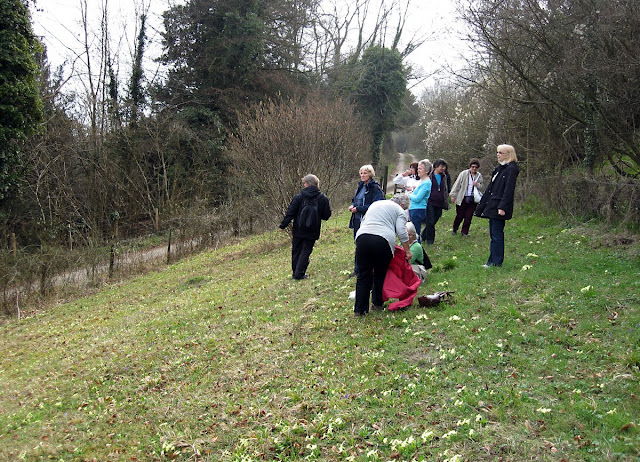 The group on Musk Orchid Bank, about to rest among primroses