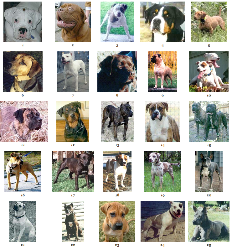 Life Spot: Pitbulls Are Wonderful Dogs & Great Family Pets
