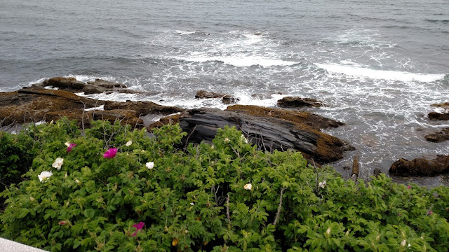 rocks and flowers along the Cliff Walk of Newport