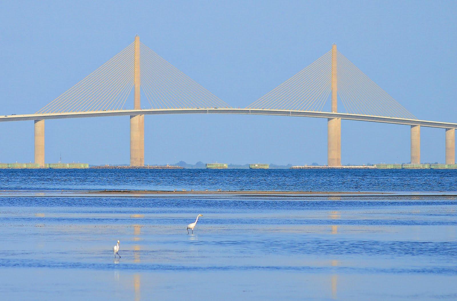 Dina S City Wildlife Adventures Skyway Bridge For