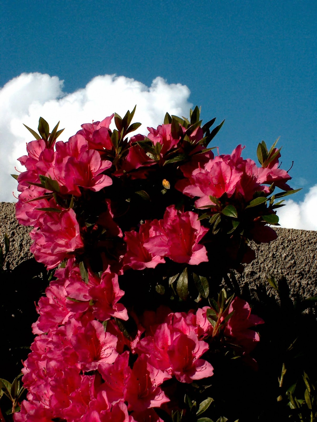 GreenFlex Landscaping Blog: Flower of March: Azalea is a Sea of Color