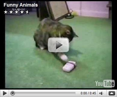 Image of: Free Download Funnyanimal8jpg Animal Wildlife Funny Wildlife Clips Animal Wildlife