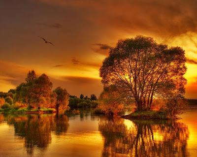 La luz dorada del otoño Fotografias de otoño