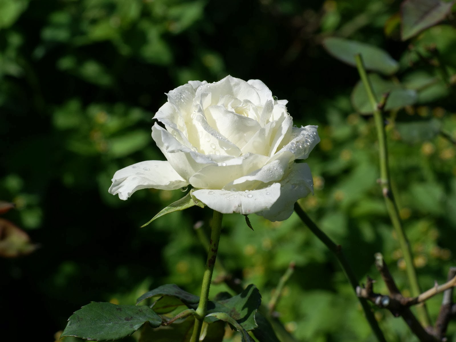 Gambar Bunga Putih Yang Cantik