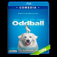 Oddball (2015) BRRip 720p Audio Dual Latino-Ingles