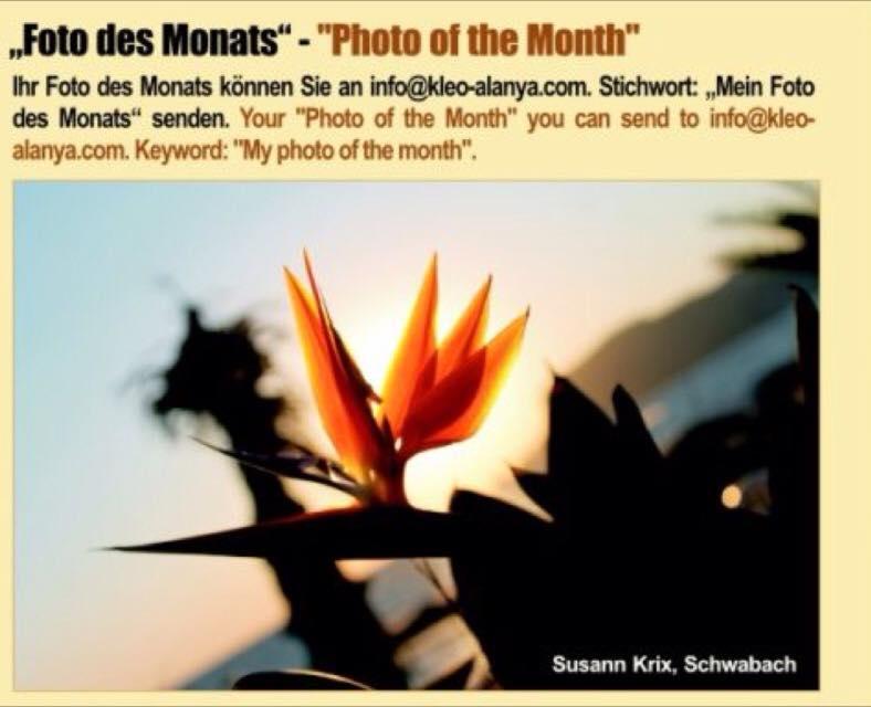"""Kleo """"Foto des Monats"""" 11/2014 by Krixpix"""