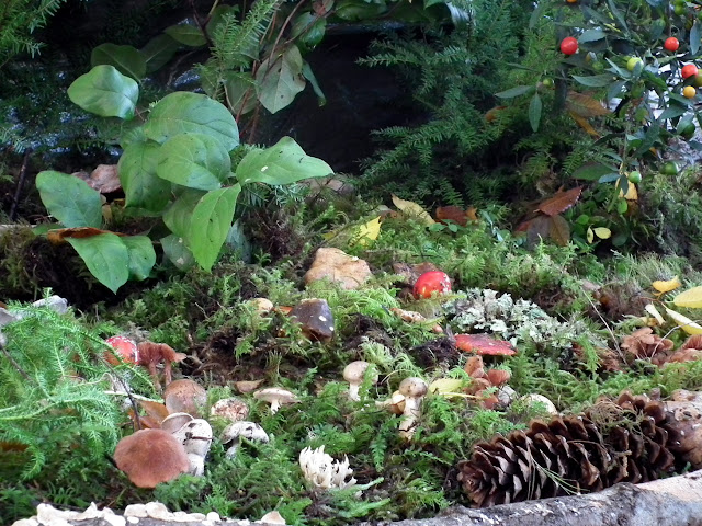 Mushrooms display at the entrance of Vancouver Mushroom Fall Show 2011
