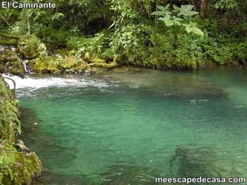 Aguas de color verde oscuro de la naciente del río Tioyacu (Rioja, Perú)