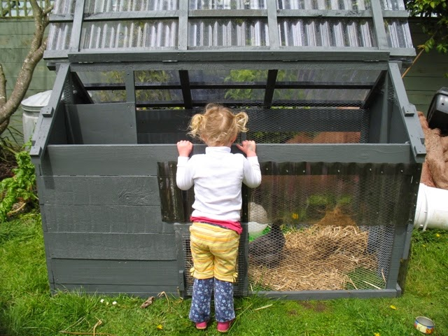 Little girl peers into chicken coop
