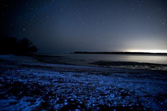 عندما تتلألأ الشواطىء كالنجوم  Glowing-waves-bioluminescent-ocean-life-explained-white-horse-key_50163_600x450-580x385