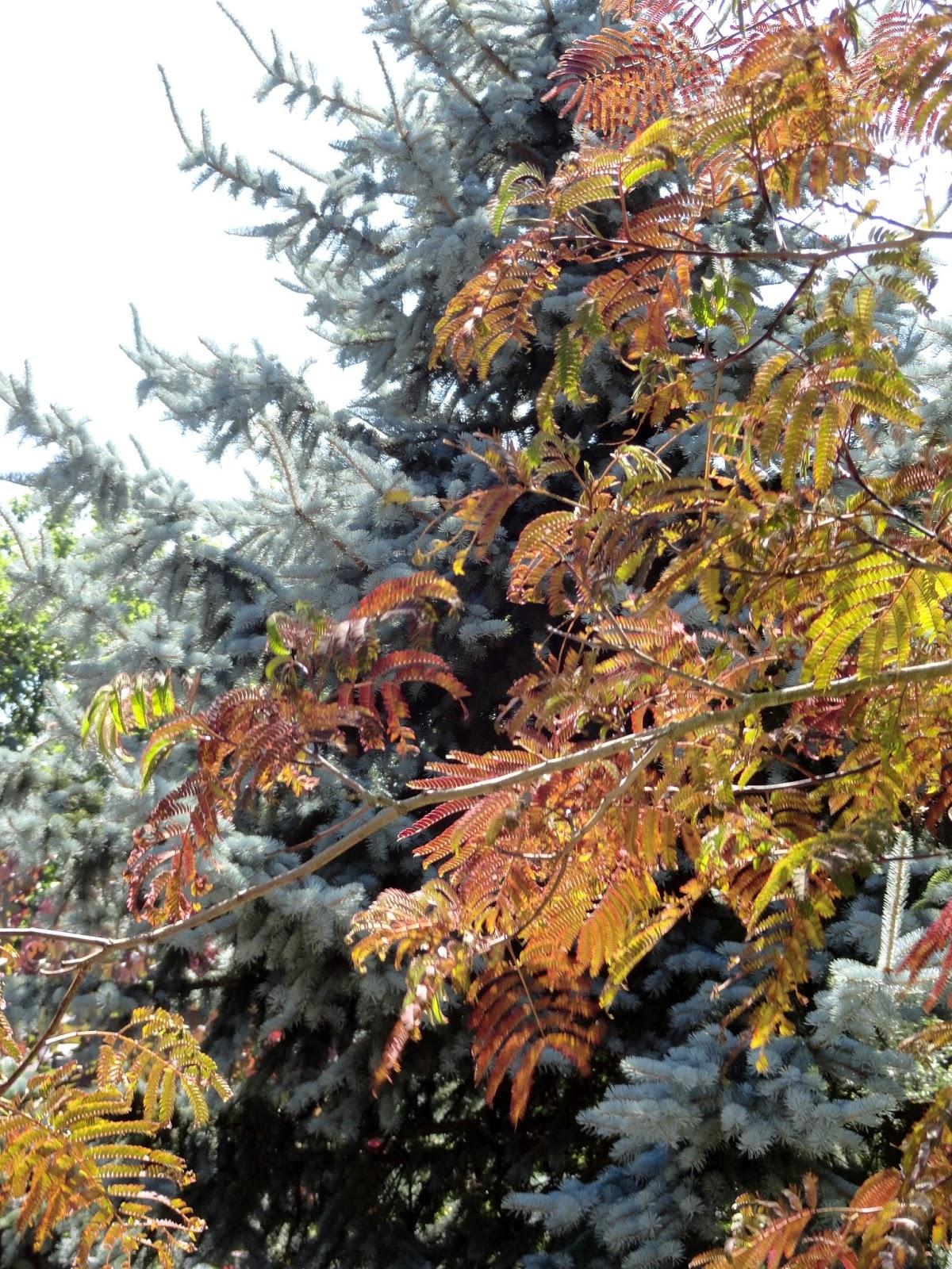 Blue Fox Garden: The Oregon Garden