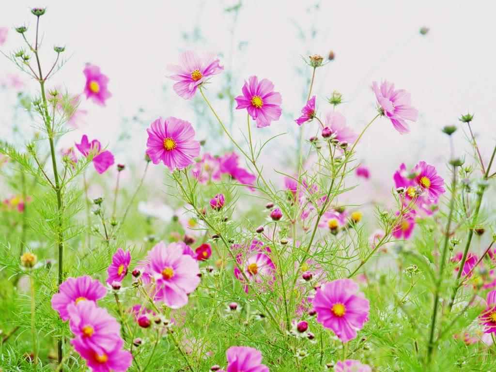 Hoa dại đẹp