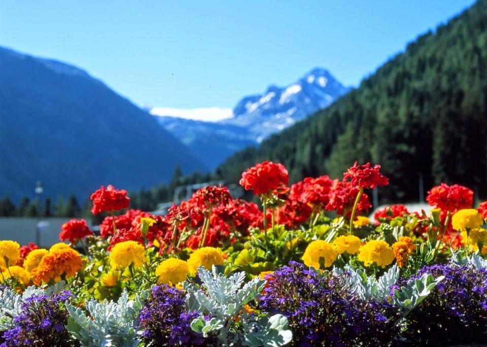 Splendida natura