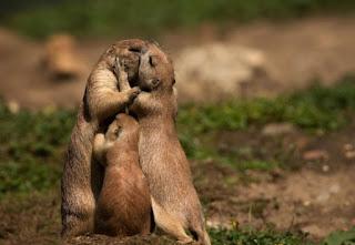 15 φωτογραφίες αγάπης που θα σας συγκινήσουν [photos]