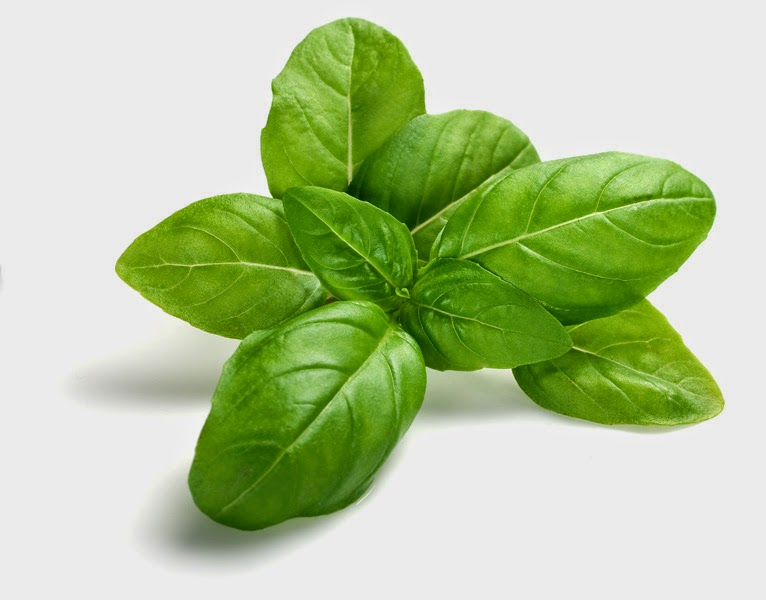 Benefits And Nutrition Of Basil Herb (Ocimum basilicum) For Health