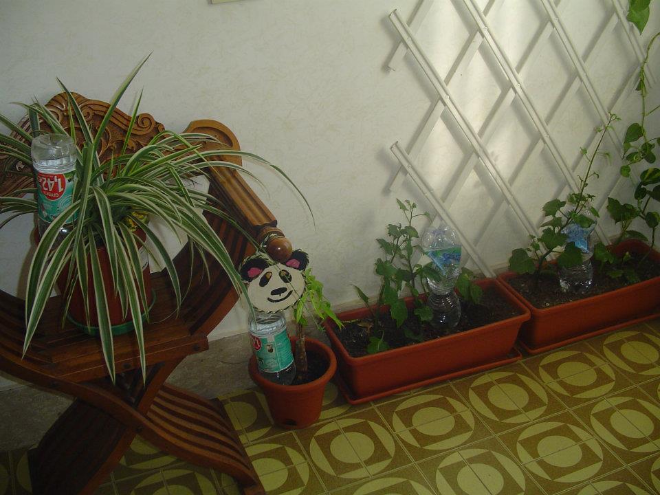 Happyippo sistema d 39 irrigazione faidate for Irrigazione piante