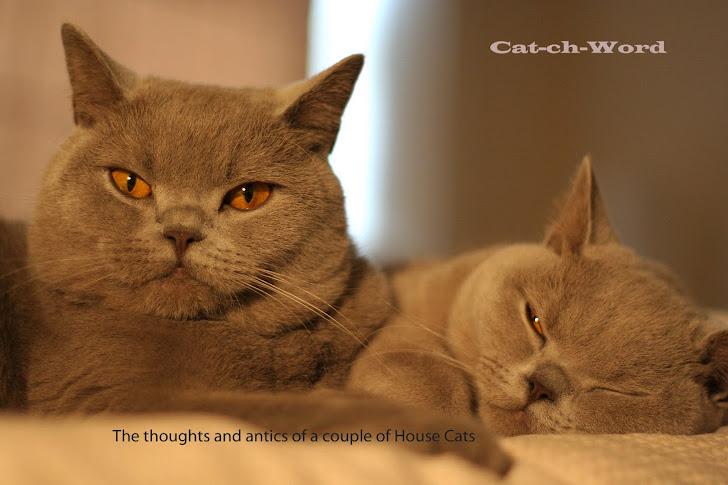 Cat-ch-Word