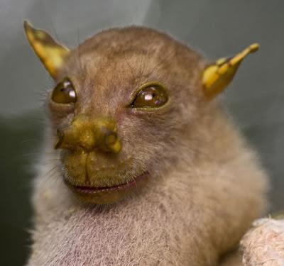 Fotos de especies raras en vías de extinción