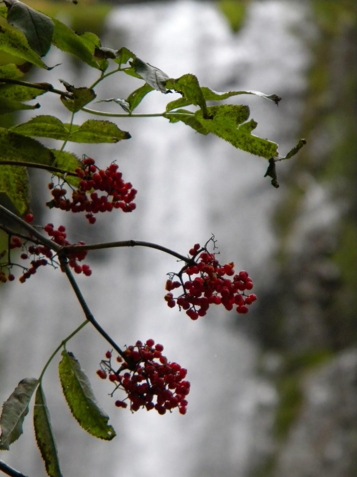 fotografie natură
